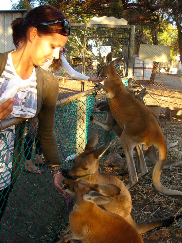 Feeding a kangaroo at a wildlife park