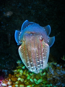 Aquarium at Vinpearl Land